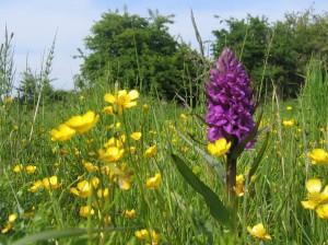 Raveningham Estate rare orchid