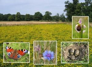 raveningham_biodiversity