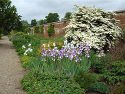 Raveningham Garden