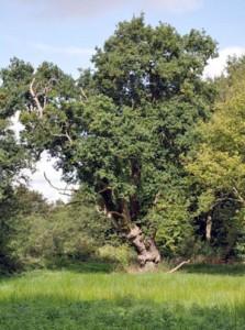 raveningham_woodland3