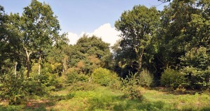 raveningham_woodland4