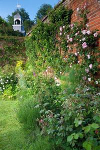 Raveningham Estate Roses