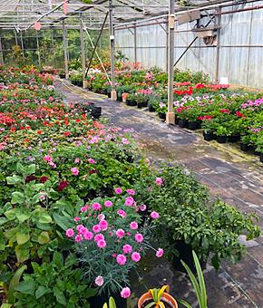 Raveningham Plant Sales